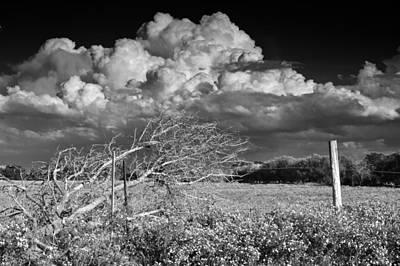 Photograph - Electricity by Ricardo J Ruiz de Porras