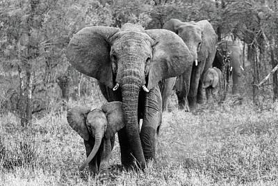 Baby Elephant Wall Art - Photograph - Elefamily by Bertram Schemel
