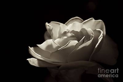 Photograph - Elegance by Diana Black