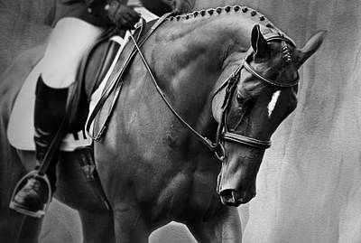 Photograph - Elegance - Dressage Horse by Michelle Wrighton