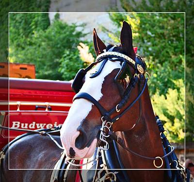Photograph - Elegance In Budweiser by Alice Gipson