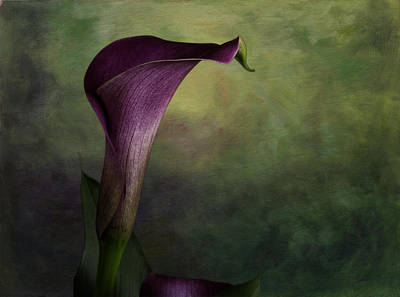 Art Print featuring the photograph Elegance In Simplicity by Kristal Kraft
