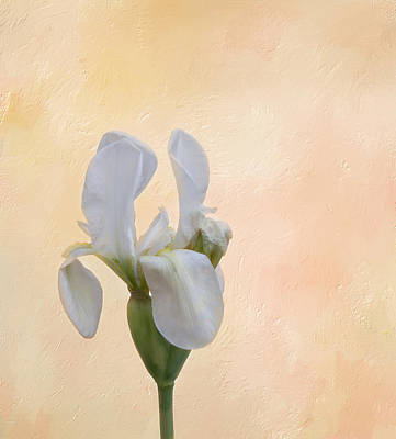 Elegance In White Art Print