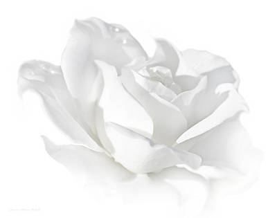 Photograph - Elegance White Rose Flower by Jennie Marie Schell