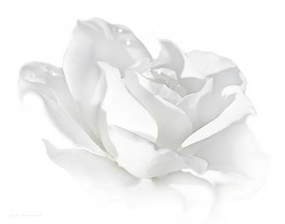 Beastie Boys - Elegance White Rose Flower by Jennie Marie Schell