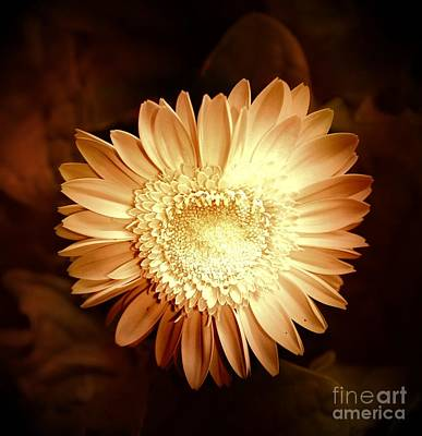 Photograph - Elegant Flower by Denise Tomasura