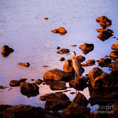 Photograph - Elegant Heron by Silken Photography