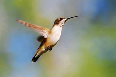 Painting - Elegant Hummingbird Journey by Christina Rollo