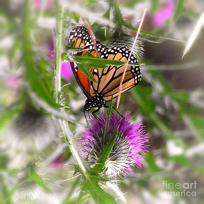 Photograph - Elegant Monarch Butterfly On Pink Flower by Jerry Cowart