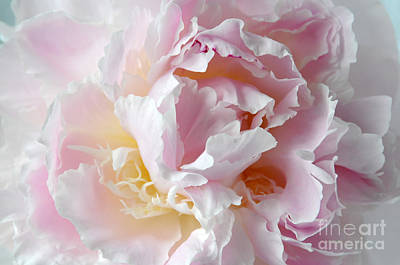 Photograph - Elegant Pink Peony by Sarah Schroder