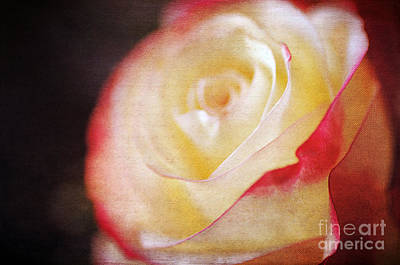 Elegant Rose Art Print by Darren Fisher