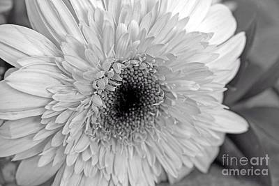 Photograph - Elegant Shades Of Gray by Mary Lou Chmura