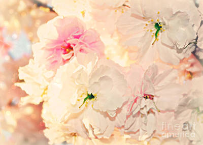 Photograph - Elegant Spring Blossoms  by Mindy Bench