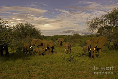 Elephants   #8625 Original