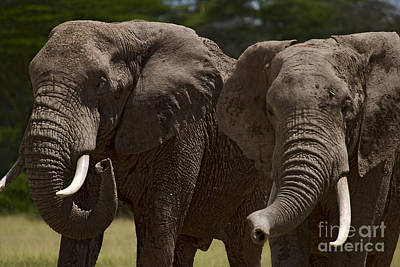 Elephants   #9274 Original