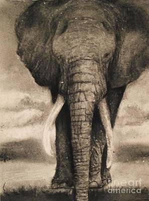 Drawing - Elephant by Adrian Pickett
