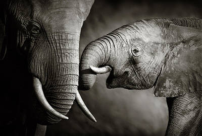 Small Photograph - Elephant Affection by Johan Swanepoel
