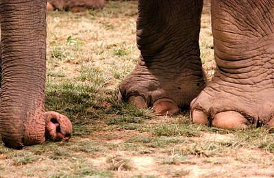 Photograph - Elephant by Amanda Just