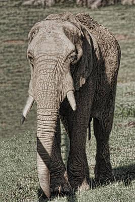 Elephants Digital Art - Elephant by Angel Jesus De la Fuente