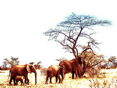 Photograph - Elephant Art by Jim DeLillo