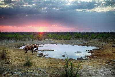 Photograph - Elephant At Sunset, Namibia by Focus on nature