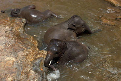 Photograph - Elephant Bath by Mark Sullivan
