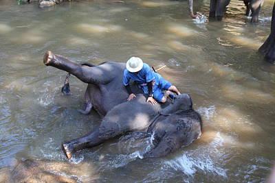 Elephant Baths - Maesa Elephant Camp - Chiang Mai Thailand - 011310 Art Print by DC Photographer