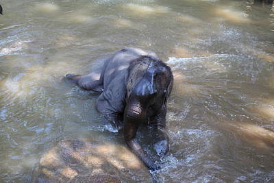 Bath Photograph - Elephant Baths - Maesa Elephant Camp - Chiang Mai Thailand - 011312 by DC Photographer
