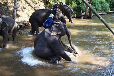 Elephant Baths - Maesa Elephant Camp - Chiang Mai Thailand - 011314 Art Print by DC Photographer