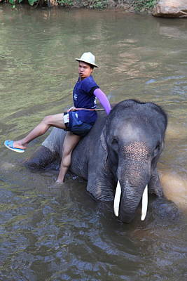 Bath Photograph - Elephant Baths - Maesa Elephant Camp - Chiang Mai Thailand - 011316 by DC Photographer