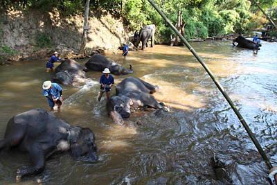 Elephant Baths - Maesa Elephant Camp - Chiang Mai Thailand - 011319 Print by DC Photographer