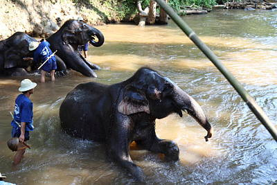 Bathing Photograph - Elephant Baths - Maesa Elephant Camp - Chiang Mai Thailand - 011326 by DC Photographer