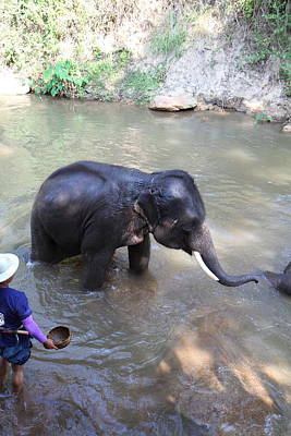 Bathing Photograph - Elephant Baths - Maesa Elephant Camp - Chiang Mai Thailand - 011328 by DC Photographer