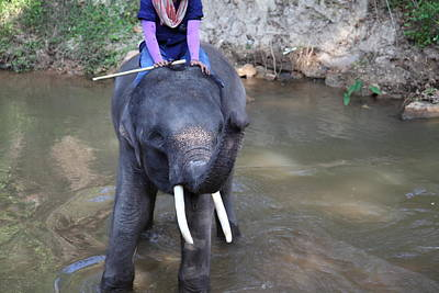 Elephant Baths - Maesa Elephant Camp - Chiang Mai Thailand - 01134 Art Print by DC Photographer
