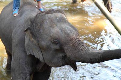 Bath Photograph - Elephant Baths - Maesa Elephant Camp - Chiang Mai Thailand - 01135 by DC Photographer