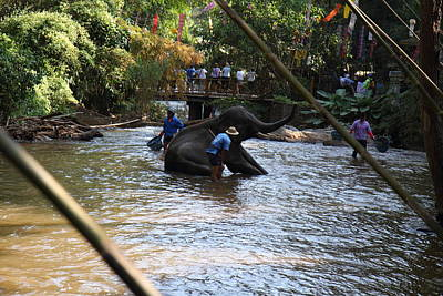 Elephant Baths - Maesa Elephant Camp - Chiang Mai Thailand - 01138 Art Print