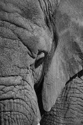 Photograph - Elephant Bw by Ernie Echols
