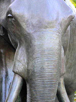 Photograph - Elephant by Charlie and Norma Brock