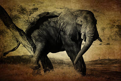 Photograph - Elephant by Christine Sponchia