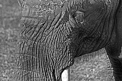 Photograph - Elephant.. Dont Cry by Miroslava Jurcik