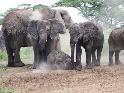 Photograph - Elephant Dust Bath by Paula Guy