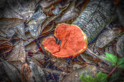 Photograph - Elephant Ear Fungus by Ronald T Williams