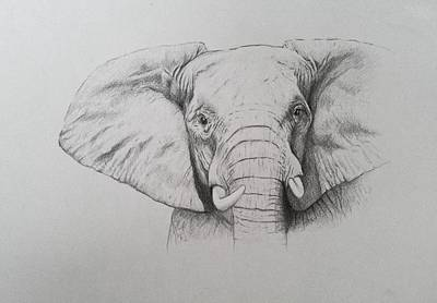 African Animals Drawing - Elephant by Ele Grafton