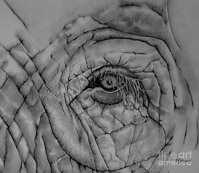 Elephant Pencil Drawing Drawing - Elephant Eye by Pamela Cawood
