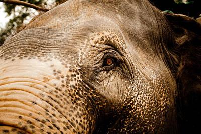 Rhinoceros Photograph - Elephant Eye by Raimond Klavins