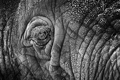 Photograph - Elephant Eye by Sebastian Musial