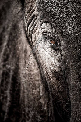 Animal Photograph - Elephant Eye Verical by Mike Gaudaur