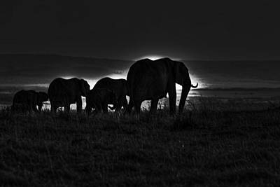 Photograph - Elephant Family by Aidan Moran
