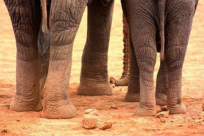Art Print featuring the photograph Elephant Family by Amanda Stadther