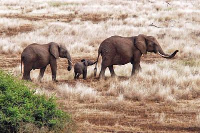 Baby Elephant Wall Art - Photograph - Elephant Family, Tanzania by Izonevision/robert D Abramson